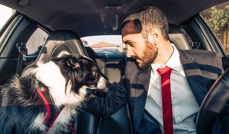 Reviews Top 13 Best Dog Seat Belt Of 2020
